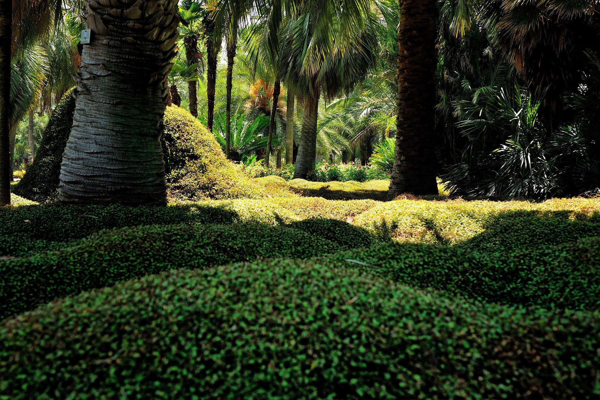 """Le meraviglie degli Huntington Botanical Gardens di Pasadena"""